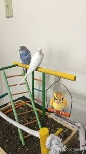 Image result for pokemon go in funny places photos