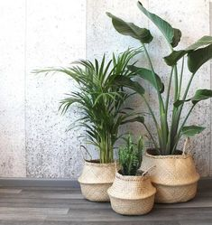 Modern hand-woven natural foldable sea grass belly basket/ wedding gift/laundry picnic storage basket/ Christmas gift in 2020 Plantas Indoor, Belly Basket, Deco Nature, Decoration Plante, Basket Decoration, House Plants Decor, Interior Plants, Concrete Planters, Houseplants