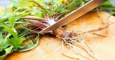 Dandelion Root: Beneficial properties for health and recipe dandelion Tea Natural Cures, Natural Healing, Dandelion Root Tea, Healthy Holistic Living, Cancer Cure, Cancer Cells, Fighting Cancer, Healing Herbs, Medicinal Plants