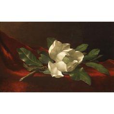 Magnolia, Martin Johnson Heade 1885-95 oil on canvas St. Louis Art Museum