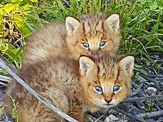 When A Teen Found These Kittens By The Side Of A Road, He Didn't Realize They Weren't What They Seem