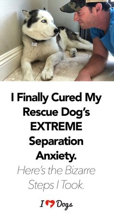 """""""If youre going through the excruciating process of dealing with canine separation anxiety, I want you to know one thing: you CAN beat it. I hope my story helps you. Dogs With Separation Anxiety, Dog Anxiety, Anxiety Tips, Anxiety Help, Anxiety Relief, Dogs With Anxiety, Overcoming Anxiety, Stress Relief, Rolo"""