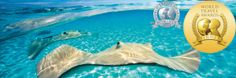 The Cayman Islands were once again featured at the 20th annual World Travel Awards 2013, which was held on 14 September in Antigua. The Cayman Islands won the award for the Caribbean's Leading Dive Destination 2013. This award is no stranger to the Cayman Islands who also won the award in 2012 and 2007. http://www.oasis-land.com/blog/post.php?s=2013-10-22-cayman-islands-win-world-travel-awards-once-again