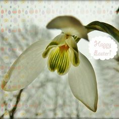 Happy Flowers, Spring 2014, Holland, The Nederlands, The Netherlands, Netherlands