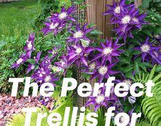 Garden Yard Ideas, Lawn And Garden, Garden Pots, Clematis Plants, Clematis Vine, Front House Landscaping, Landscaping Plants, Landscaping Ideas, Flowering Bonsai Tree