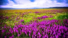 Mountains Meadow Flowers