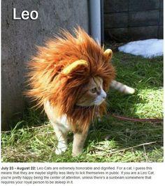 Leo Cat!