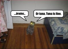 #Zombie cat can't decide, brains or tuna...