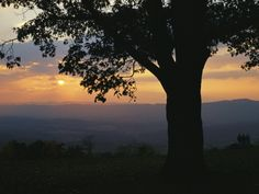 Sunset and Silhouetted Oak Tree over the Shenandoah Valley, Dickeys Ridge Visitors Center Photographic Print by Raymond Gehman at Art.com