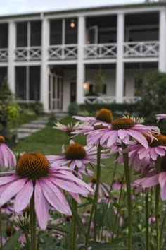 Garden behind the Charles Hotel in Niagara on the Lake