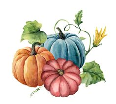 Watercolor autumn pumpkins Hand painted bright pumpkins with leaves and flowers isolated on white background Botanical illustration for design vector art illustration Illustration Botanique, Pumpkin Art, Pumpkin Drawing, Autumn Art, Fall Pumpkins, White Pumpkins, Painted Pumpkins, Free Vector Art, Fall Flowers