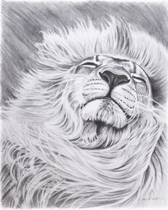 """Items similar to Lion Pencil Drawing Artwork. Giclee Print of Original """"Daydreamer"""" on Etsy Animal Drawings, Cool Drawings, Pencil Drawings, Drawing Animals, Pencil Art, Narnia, Lion Drawing, Drawing Hair, Drawing Stuff"""