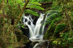 Olinda Falls, Victoria, Australia. Just down the road from my old house.
