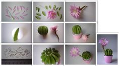 Echinopsis - Kaktusz - https://www.facebook.com/Csodavirag