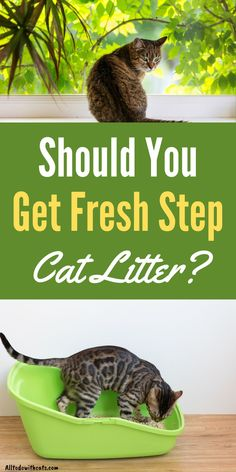 What is Fresh Step cat litter and is it right for your cat? Discover 3 different types of Fresh Step cat litter and if it's suitable for you and your cat. #catlitterideas #freshstepcatlitter #lowdustcatlitter #bestcatlitter Automatic Litter Box, Best Cat Litter, Cat Reading, Lots Of Cats, Get Fresh, Cat Life, Animal Shelter, Cool Cats