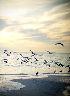 There's nothing like walking along the surf and watching the gulls scatter into the wind. xoxo Marty
