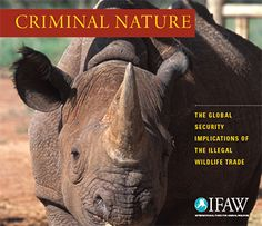 Check out our infographic with several alarming facts pulled from the IFAW Criminal Nature report on wildlife crime. Click here!