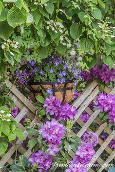 Container gardening in the shade can be a bit tricky. This list of blue plants for containers in the shade will have the pots on your patio, walkway or porch looking beautiful all summer long. Shade Garden Plants, Blue Plants, Tall Plants, Shaded Garden, Summer Plants, Potted Plants, Container Plants, Container Gardening, Flower Containers
