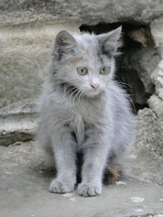 ...kitty...Looks feral - so beautiful!