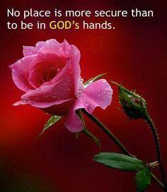Gods Hands, Hands John, Roses Roses Roses, Roses Iii, Roses, God S, Beautiful Roses, Beatiful Art, Plain Beautiful