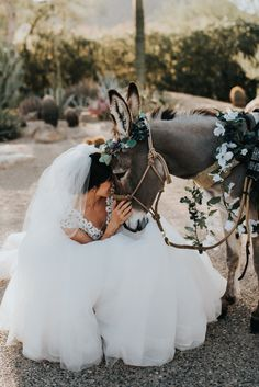 Not sure if there's anything cuter that this little donkey with a floral crown! Cute Donkey, Mini Donkey, Donkey Donkey, Baby Animals, Cute Animals, Wild Animals, Mamma Mia Wedding, Miniature Donkey, Greece Wedding