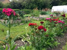 On the March 2015 community gardens will be connecting as gardeners meet up in Galway. 8th March, Allotments, Connection, Gardens, Community, Outdoor Gardens, Garden, House Gardens