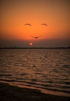 Beautiful sunset over the ocean with birds, making a face within the background Amazing Sunsets, Beautiful Sunset, Amazing Nature, Beautiful World, Beautiful Places, Sunset Pictures, Nature Pictures, Cool Pictures, Cool Photos