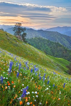 Wildlfowers in the Tehachapi Mountains along the Caliente-Bodfish highway east of Bakersfield, California, by Mark Geistweite Beautiful World, Beautiful Places, Beautiful Pictures, Composition Photo, Landscape Photography, Nature Photography, Photography Hacks, Photography Lighting, Landscape Paintings