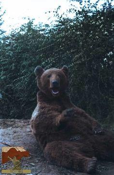 Niedźwiedź Wojtek syryjski niedźwiedź brunatny adoptowany przez żołnierzy 22. Kompanii Zaopatrywania Artylerii w 2. Korpusie Polskim dowodzonym przez gen. Władysława Andersa. Niedźwiedź brał udział w bitwie o Monte Cassino. W jednostce nadano mu stopień kaprala.