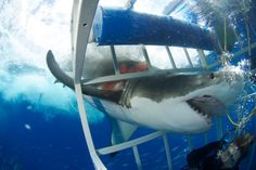 The Day I Came Face To Face With A Great White Shark | The Huffington Post