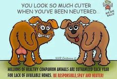 That goes for the kitties too!  Spay/Neuter please, thank u :-D