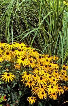 """Easy Plants To Grow - Gardening Tips - Good Housekeeping. zones 3 - Expert says: """"The showiest of my self-seeding perennials, these golden daisies bloom from mid-July through mid-September and beyond. Easy Care Plants, Easy Plants To Grow, Cool Plants, Landscaping Plants, Front Yard Landscaping, Landscaping Rocks, Succulents Garden, Planting Flowers, Hardy Plants"""
