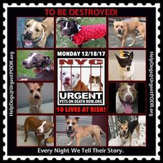 TO BE DESTROYED 12/18/17 - - Info    https://newhope.shelterbuddy.com/Animal/List  To rescue a Death Row Dog, Please read this:http://information.urgentpodr.org/adoption-info-and-list-of-rescues/  To view the full album, please click here:http://nycdogs.urgentpodr.org/tbd-dogs-page/ -  Click for info & Current Status: http://nycdogs.urgentpodr.org/to-be-destroyed-4915/