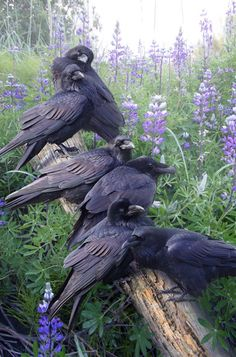 μεγάλο πουλί άνδρες Μάστερ