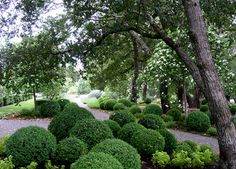 Blasen Gardens - traditional - landscape - san francisco - Blasen Landscape Architecture