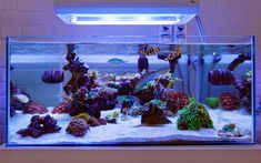 4x5 - 2014 Featured Nano Reefs - Featured Aquariums - Monthly Featured Nano Reef Aquarium Profiles - Nano-Reef.com Forums