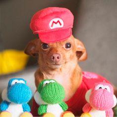 As melhores fantasias de cachorro do Instagram : Veja mais no - taofeminino