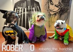 Batman, Robin, and the Joker, French Bulldogs in costumes