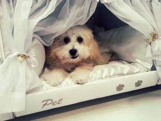 un lit avec niche pour chien intégrée  2Tout2Rien
