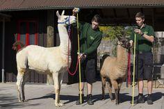 London Zoo annual weigh in | Las imágenes curiosas del pesado anual de los animales del Zoo de Londres - Yahoo Noticias España