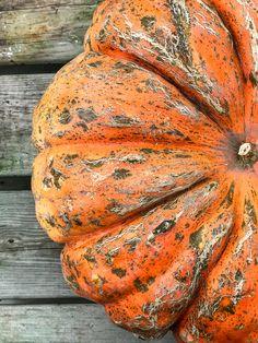 - How Sweet Eats Tuesday, Pumpkin, Fall, Autumn, Pumpkins, Fall Season, Squash