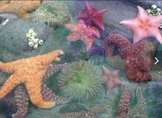 starfish, ocean, and sea image No Ordinary Girl, Orcas, Underwater World, Summer Aesthetic, Ocean Life, Marine Life, Sea Creatures, Lovely Creatures, Under The Sea