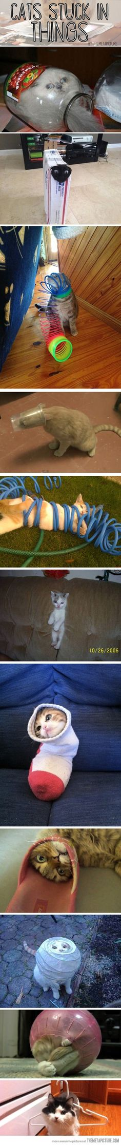 Cats stuck in things- awful, but hilarious at the same time!