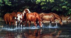Artist Chris Cummings Unframed Wild Horse Picture Reflections | WildlifePrints.com