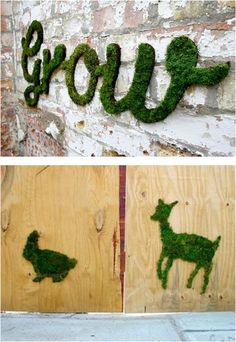 Decorating With Moss Makes Your Creativity Grow #ecopin