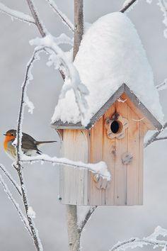 Céramique Chargeur oiseaux sauvages-Design Oiseau ouvert