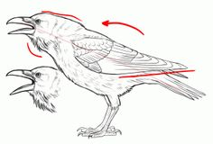 how to draw ravens step 11