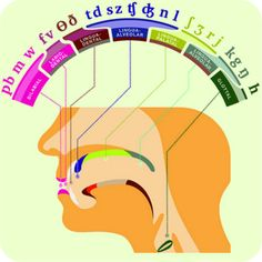 Where Our Bodies Produce Speech #language #linguistics