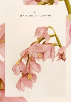 Orchid floral photography, neutral, blush and coral color palette, elegant and luxurious mood board. Still Life Photography, Fashion Photography, Floral Photography, Monochrome, Beige Aesthetic, Photo Accessories, Photography Branding, Art Direction, Aesthetic Wallpapers