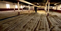 THE BALVENIE is the only distillery to maintain and operate a working floor maltings in the Scottish Highlands. After steeping the grain in spring water sourced from the hills above the distillery, we spread the grains across our malting floor.